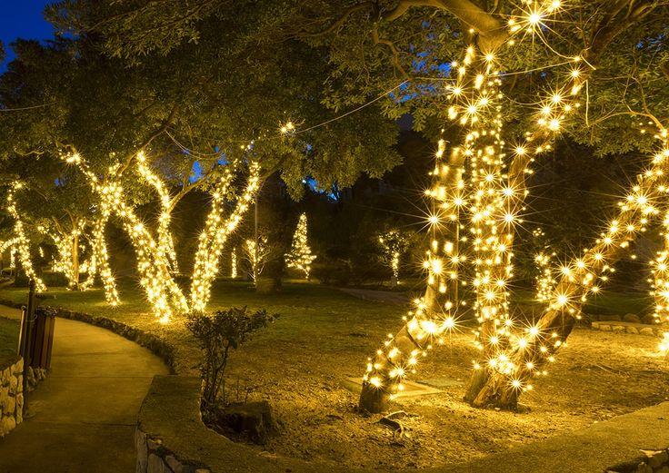 Wrapping Trees with Christmas Lights Christmas Lights