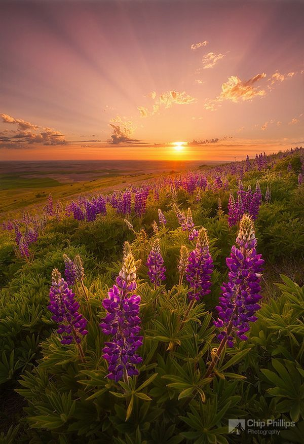 nature photography - Google Search