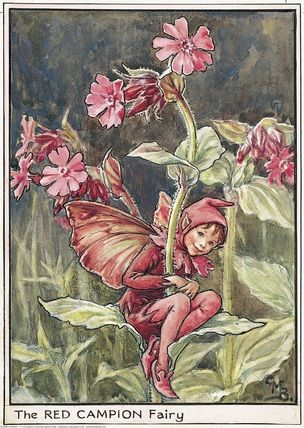 Illustration for the Red Campion Fairy from Flower Fairies of the Wayside. A boy fairy sits on the leaves of a red campion flower with his arms and legs round the stem.  										   																										Author / Illustrator  								Cicely Mary Barker