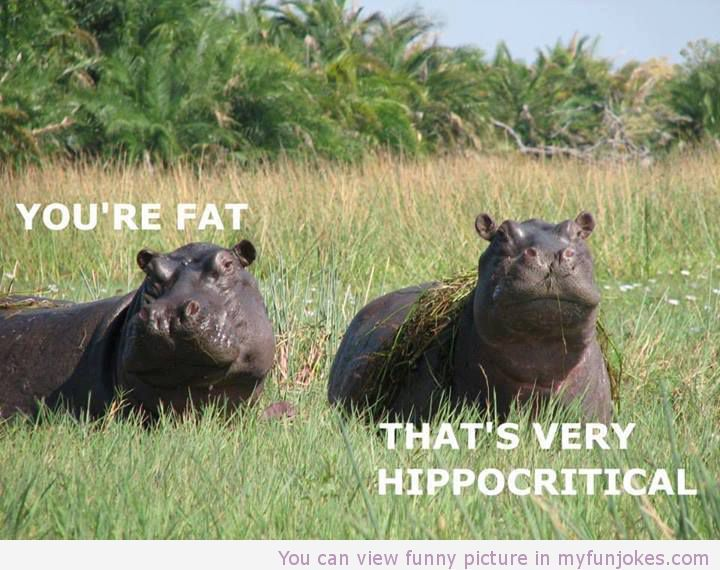 Youre fat funny images
