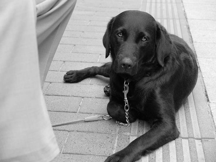 Not-Fellchen.Kleine und große Notfälle eben. Hunde, die meine Aufmerksamkeit erregt haben und die Hilfe benötigen. Oftmals leben sie derzeit in Tierheimen. Oder vorübergehend bei privat engagierten Tierfreunden oder Pflegefamilien. Ziel ist es, jedem dieser Not-Fellchen dauerhaft Geborgenheit bei festen Bezugspersonen zu geben – egal, ob alleinstehend, als Paar oder als Familie. Im Blog mache ich regelmäßig auf diese Not-Fellchen aufmerksam. Und hoffe so, einen Beitrag zu leisten für eine…
