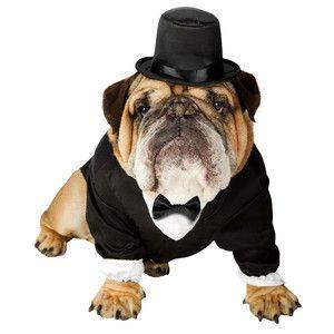 Hundekostüm Feiner Herr, 23,90€, jetzt auf Fab.