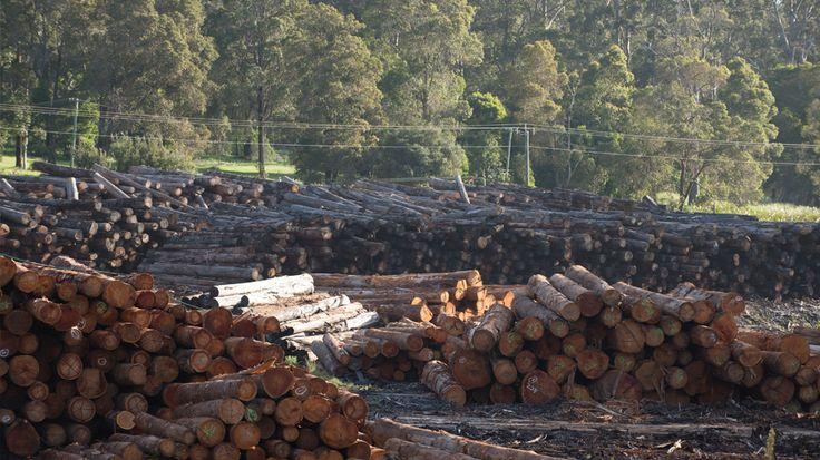 Timber industry in the Pemberton wine region