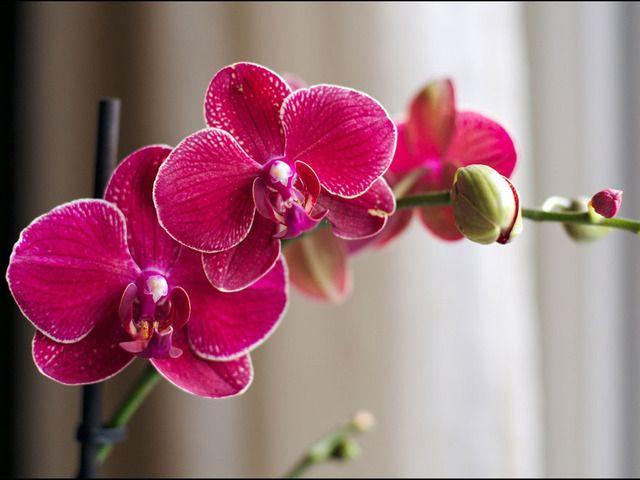 Faites refleurir votre orchidée : arrosage, lumière, taille... nos conseils d'entretien en images pour le phalaenopsis.