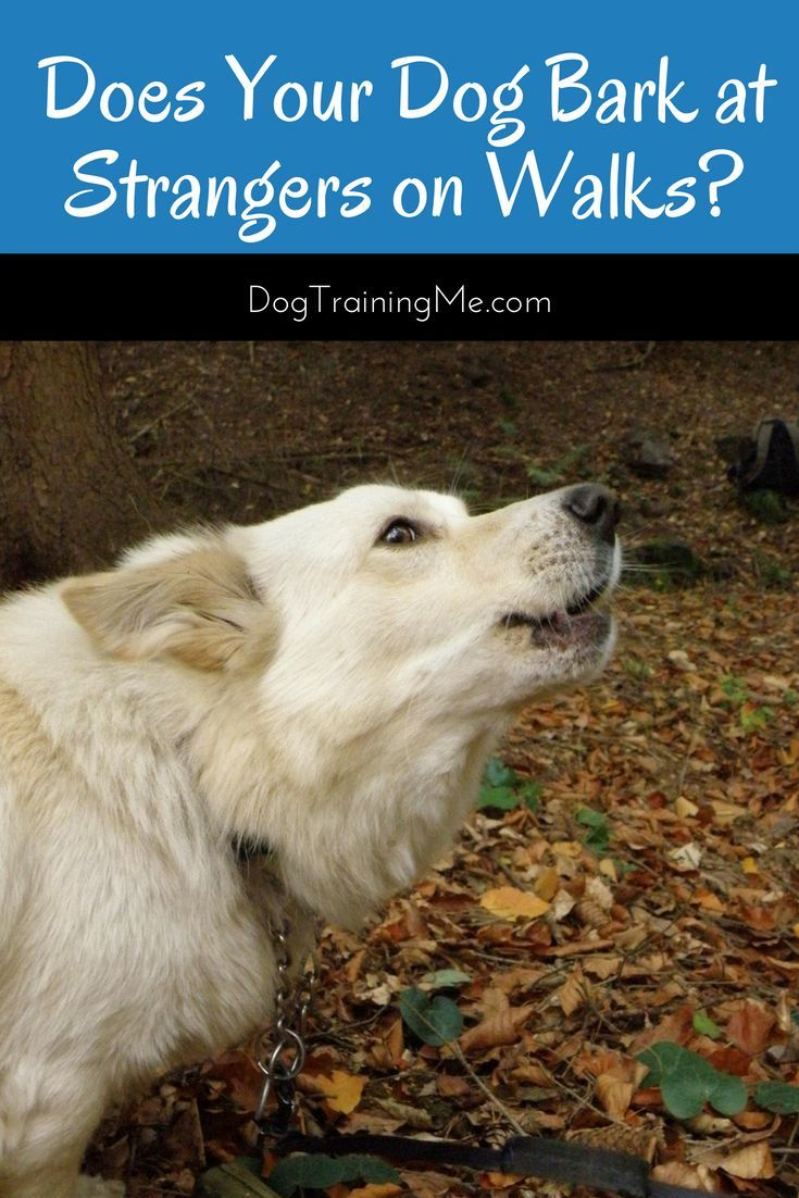 Your Dog Barks At Strangers On Walks What Can You Do Dog