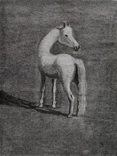 weisses Pferd, Kohlenbild von Christopher Baumann. www.christopher-baumanns-bilder.com