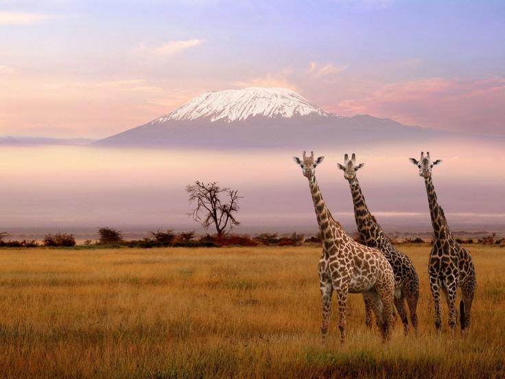 La Nostra Africa - Alle falde del Kilimanjaro - Traveller Cards