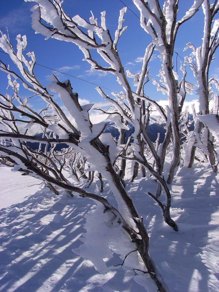 sunny skies, fresh snow
