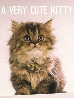 What Is Your Spirit Animal. I'm the cute kitten because everyone loves me. Lol!!!