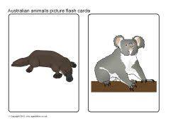 Australian animals picture flash cards