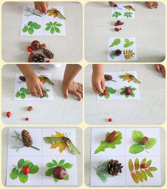 Играем в лото, где на карточки с листьями нужно положить плоды деревьев