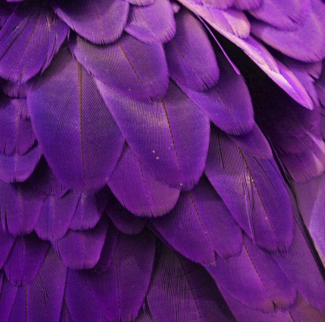 Un toque de suavidad y sofisticación violeta para inspirar tu look.
