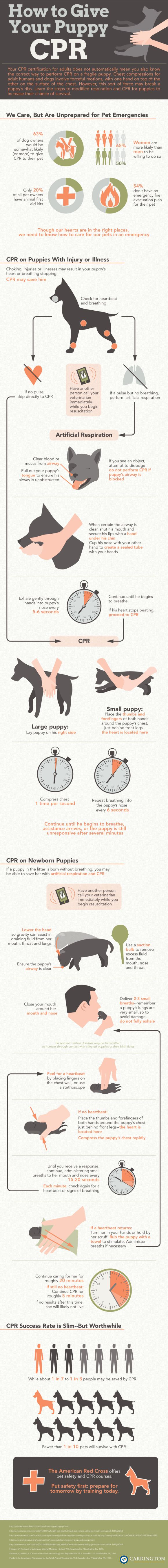 How to give your puppy CPR. Absolutely love this - helpful info- I did not know- hope no one ever needs to do this - but just in case!