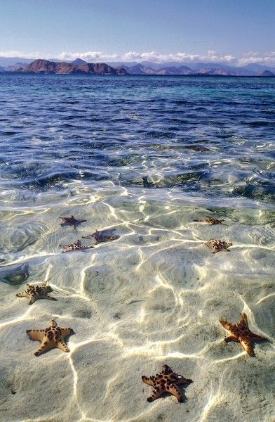 SEASTARS: Sea Stars, Crystals, Sands, Grand Cayman, Grandcayman, The Ocean, Cayman Islands, Starfish Beaches, The Sea