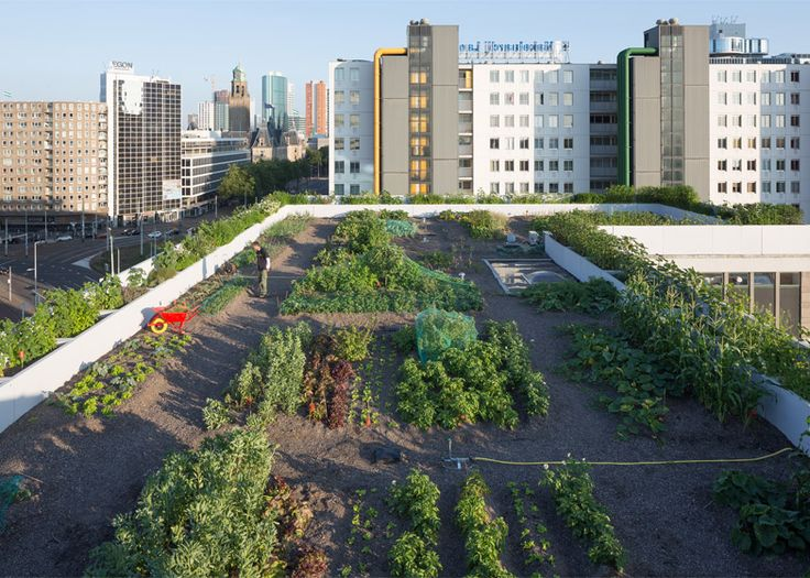 Luchtsingel by ZUS is an elevated pathway across Rotterdam