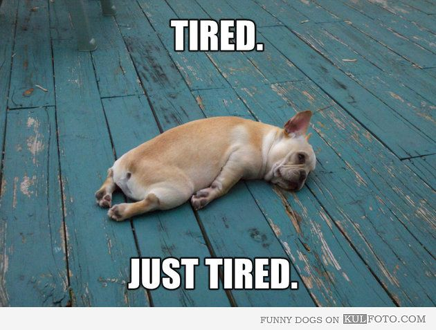 Oh, I know this feeling. Tired. Just tired. - Funny French bulldog