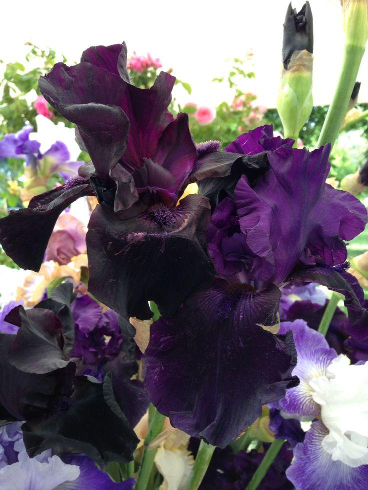 Iris... E rimane il nostro preferito! #iris #erbolario #picpftheday