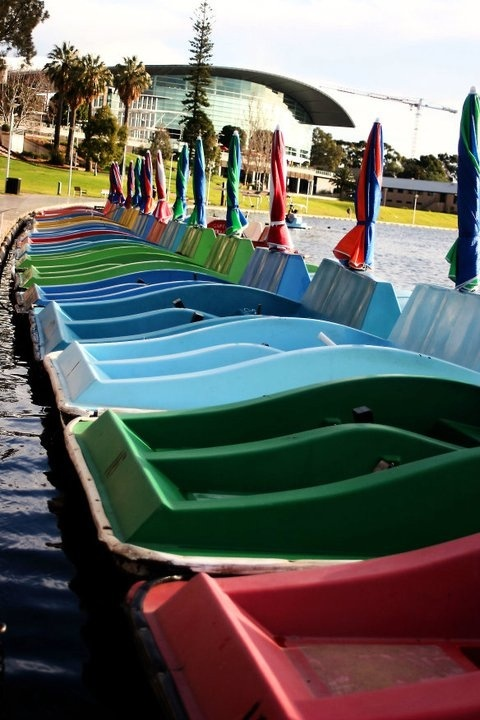 Paddle Boats sitting on Adelaide's River Torrens, South Australia
