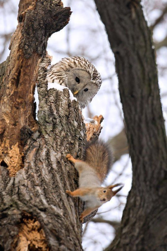 Funny Owls 21. Guess he's not hungry. Good day for the squirrel.