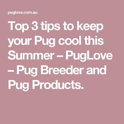 Top 3 tips to keep your Pug cool this Summer – PugLove – Pug Breeder and Pug Products.