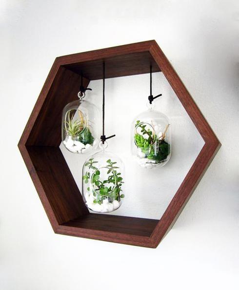 Terrarium géométrique en bois et en verre