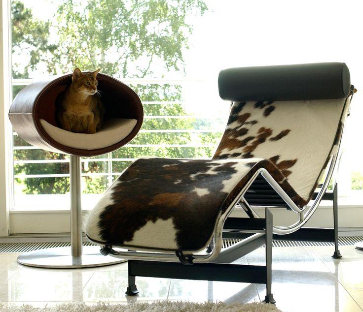 1000 images about pets on pinterest dog dishes dinner bowls and bird tables. Black Bedroom Furniture Sets. Home Design Ideas