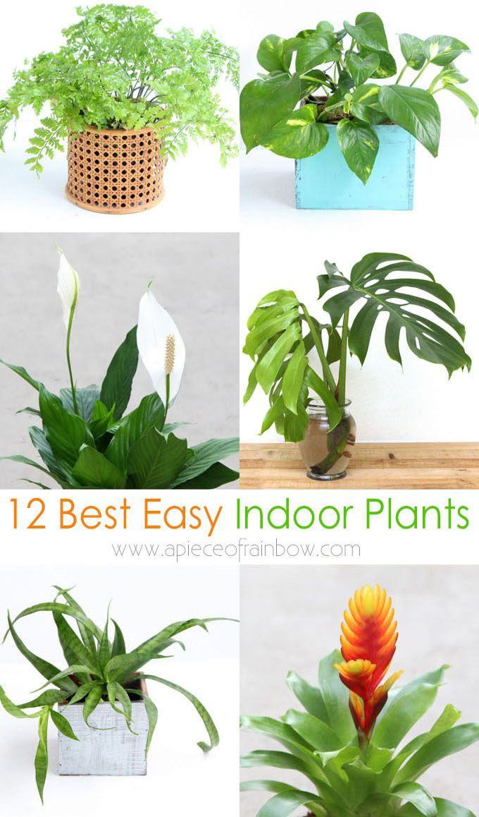 12 Best Air Purifying Indoor Plants You Won T Kill In 2020 Hanging Plants Indoor Indoor Air Purifying Plants Hanging Flowering Plants