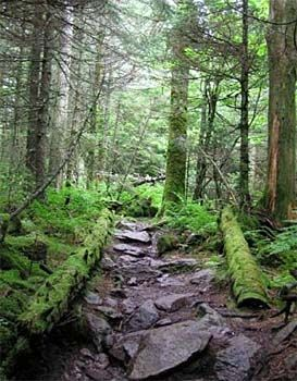 Appalachian Trail!: Challenges, Buckets Lists, Dreams, Appalachian Trail Lauren, Daughters, Appalachian Trail Soooo, Trail Lauren Storey, Thanksappalachian Trail