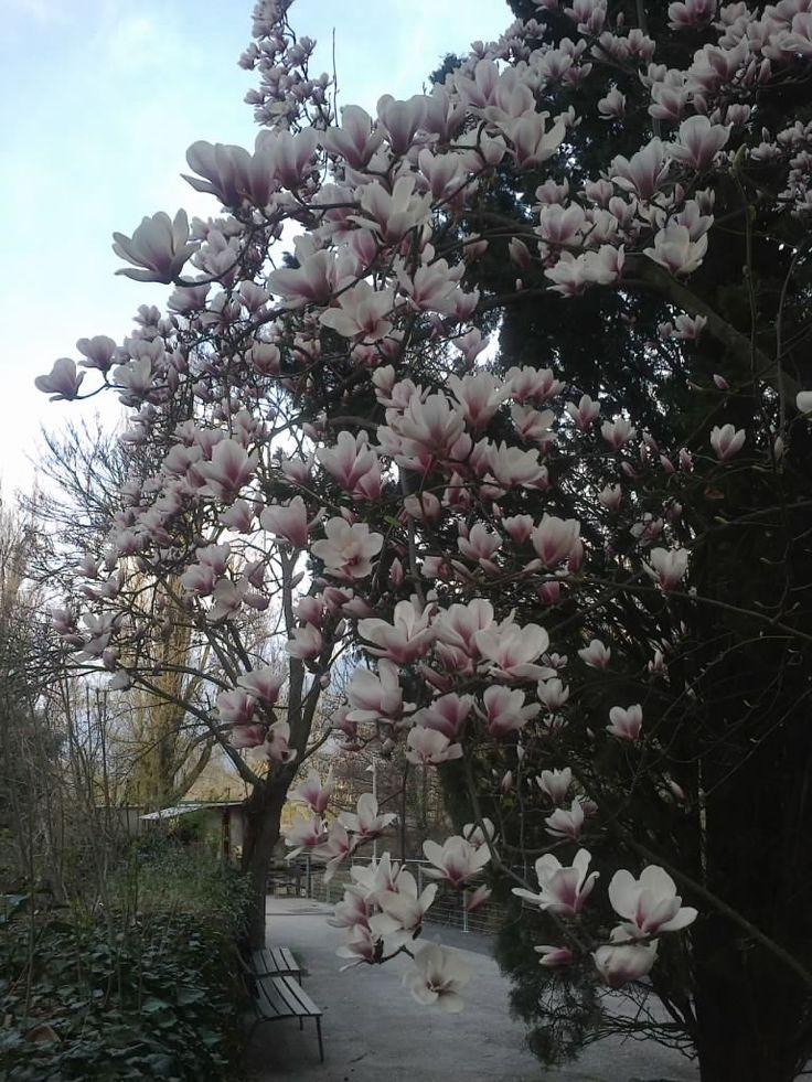 Garten bei Lana