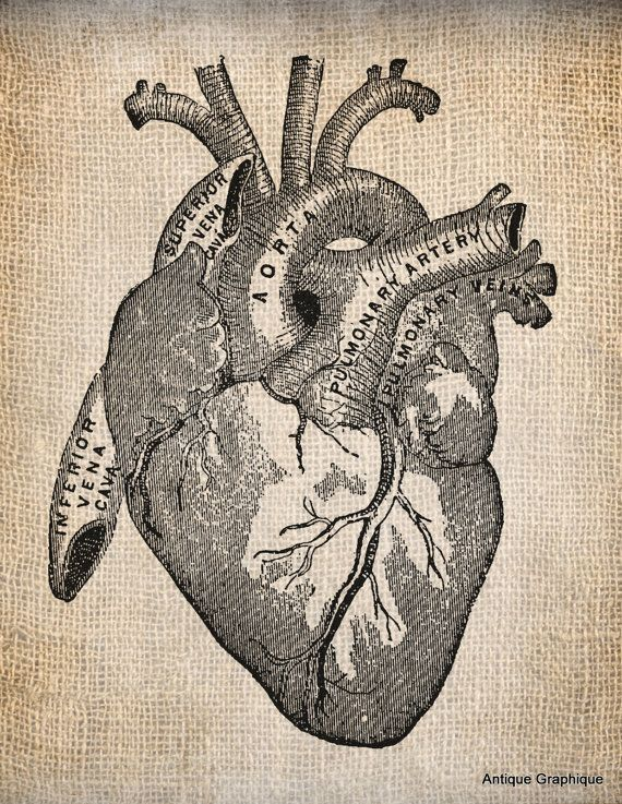 Antique Heart Anatomy Illustration Digital Download for Papercrafts, Transfer, Pillows, etc Burlap No 1505 via Etsy