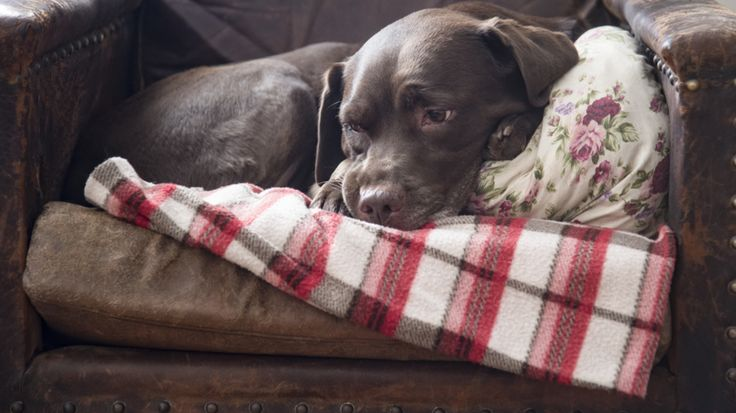 Arthritis in dogs Doctors don't exactly know the reason why, but there is one condition that both humans and our beloved pets suffer from more persistently in the winter: arthritis & joint pain. And while we humans have the ability to reach for pain meds and …