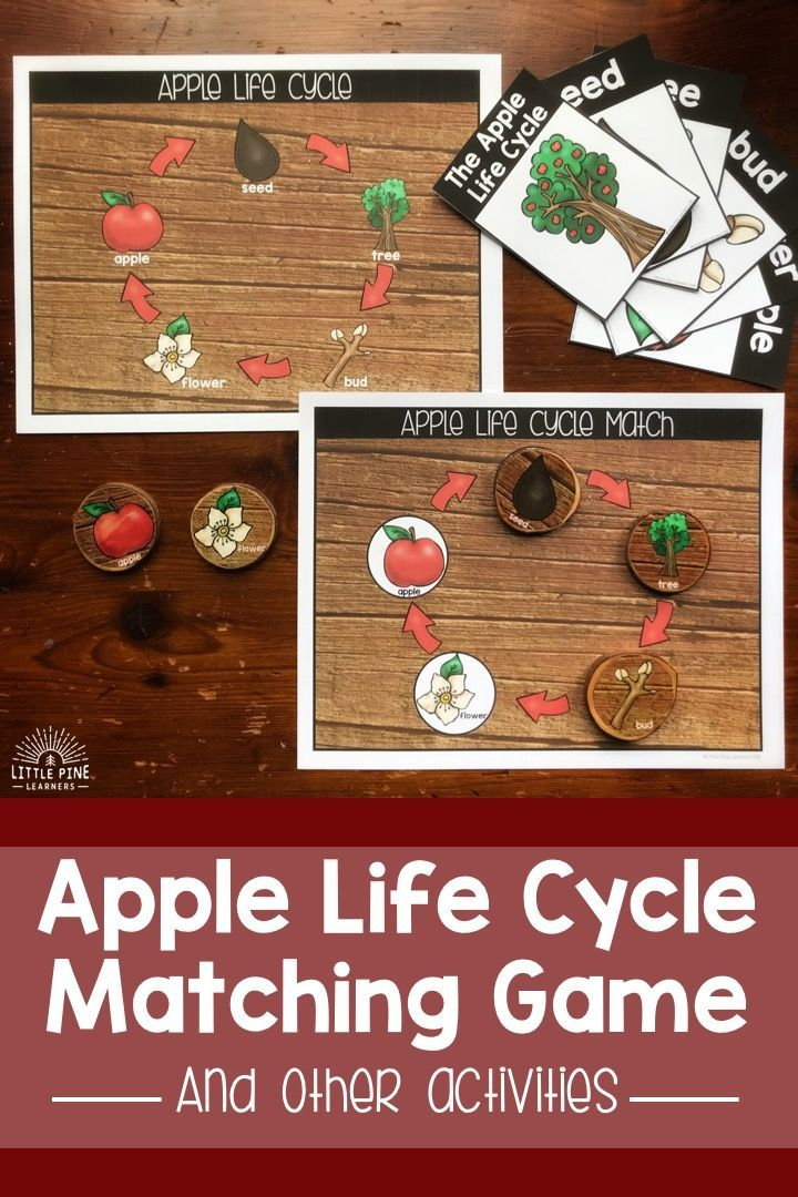 Apple Anatomy And Life Cycle Activities Little Pine Learners