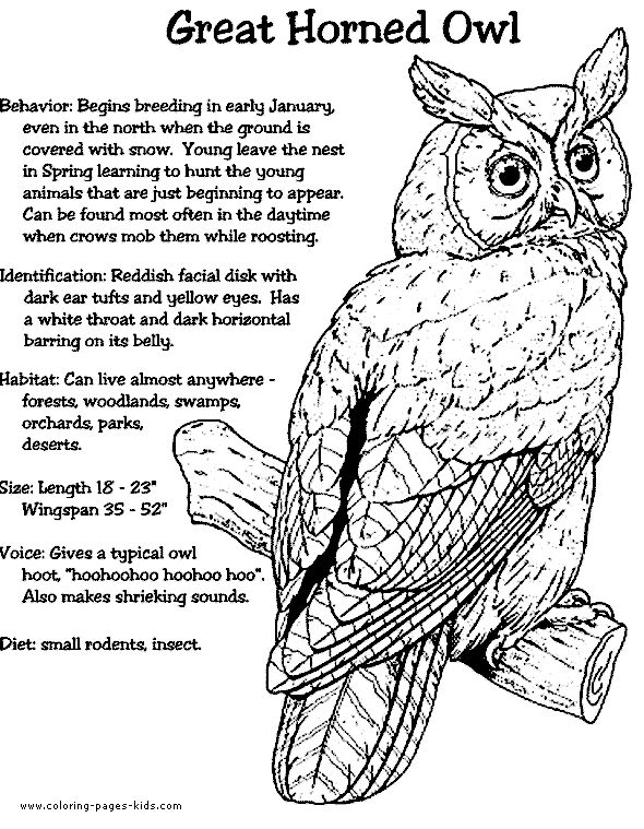 great horned owl color page nature crafts and ideas DIY Bedroom Decorating Ideas Rustic Bedroom Decor DIY