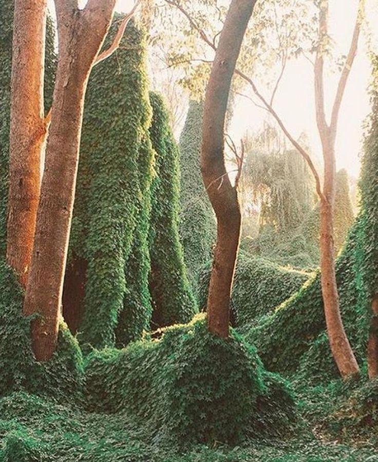 Secret garden, Gwelup