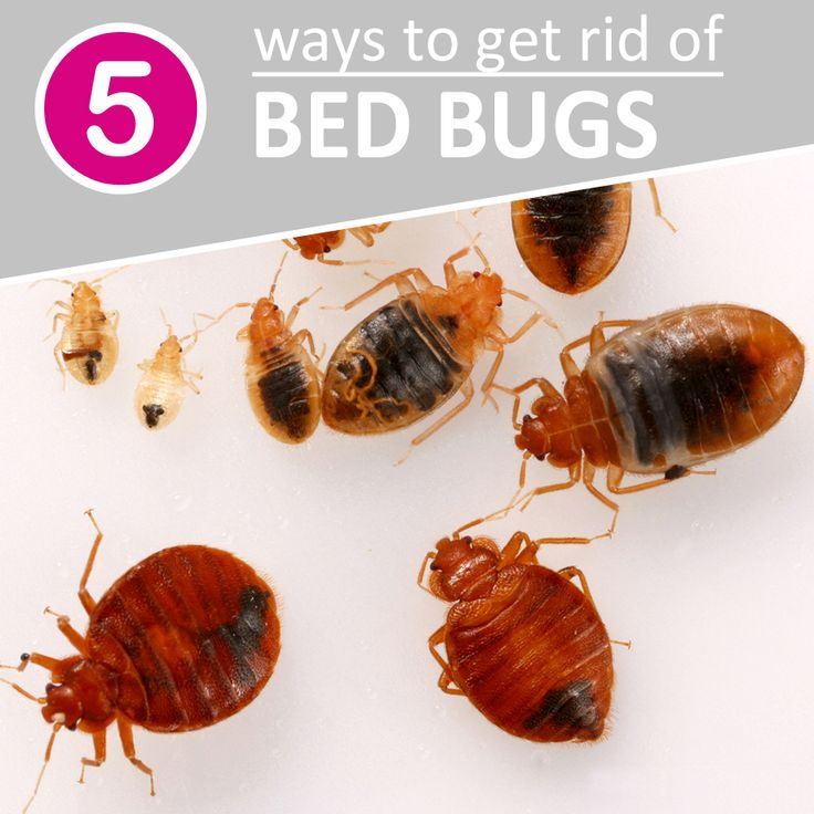 get kill bed how you of bugs to yourself naturally learn rid
