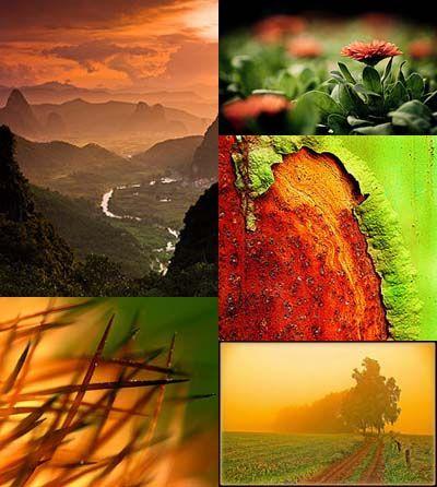 Green & Orange [Friday Flickr Photo Collage]   Flickr - Photo Sharing!