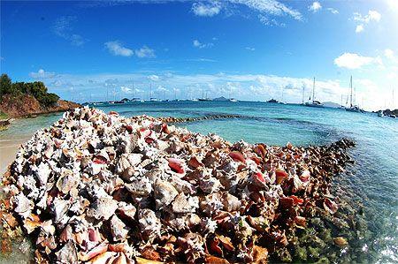 Baradol - Saint-Vincent-et-les-Grenadines. Sur routard.com, retrouvez les meilleures photos de voyage des internautes.