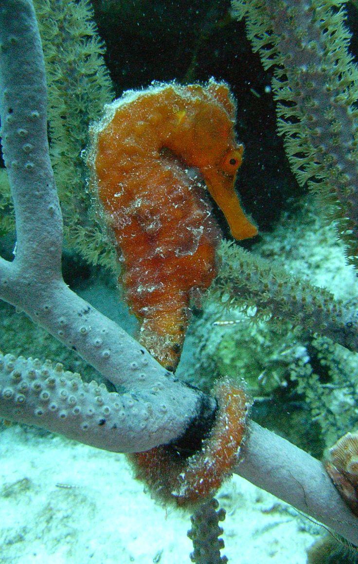Sand Dollar Bonaire Diving And Snorkeling BONAIRE