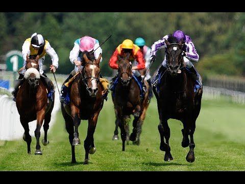 Horse Race | Belmont Horse Race | Horse Races | Horse Racing Schedule | ...