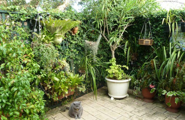Holly's garden | GardenDrum