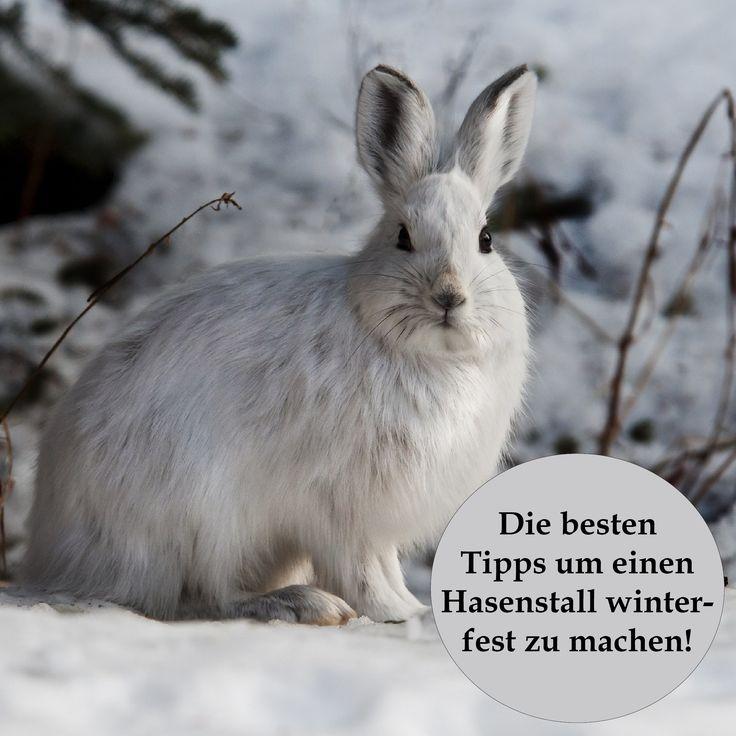 """Erfahren Sie die besten Tipps zum Thema: ,,Einen Hasenstall winterfest machen"""", sowie viele weitere Ratschläge und Ideen rund um das Leben mit Kaninchen."""