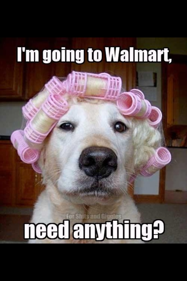 They say pets start to look like their owners... or is it the other way around? #humor