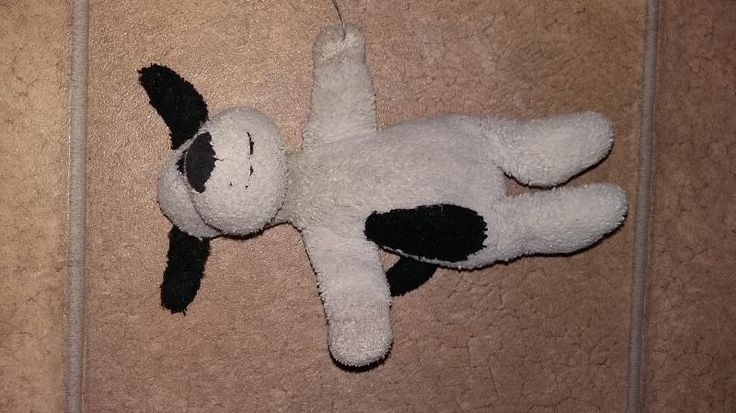 Lost on 13 May. 2016 @ Edinburgh . Very well loved black and (now off) white small 'jellycat' dog. Lost today, either in Waitrose Comely Bank or in and around Victoria Park / Trinity Primary School areas. Much missed friend of a ver... Visit: https://whiteboomerang.com/lostteddy/msg/9cadxy (Posted by Kev on 13 May. 2016)