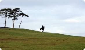 Image result for the curragh plains