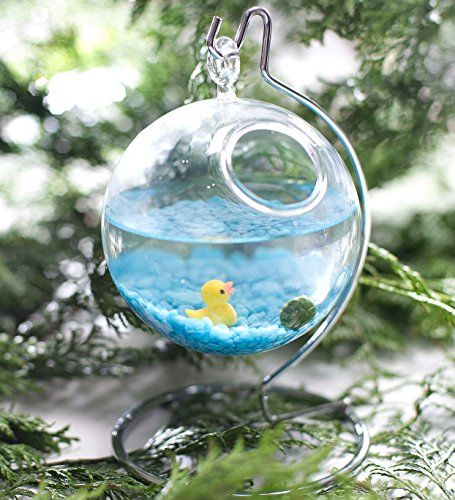 1000 ideas about marimo moss ball on pinterest marimo for Moss balls for fish tanks