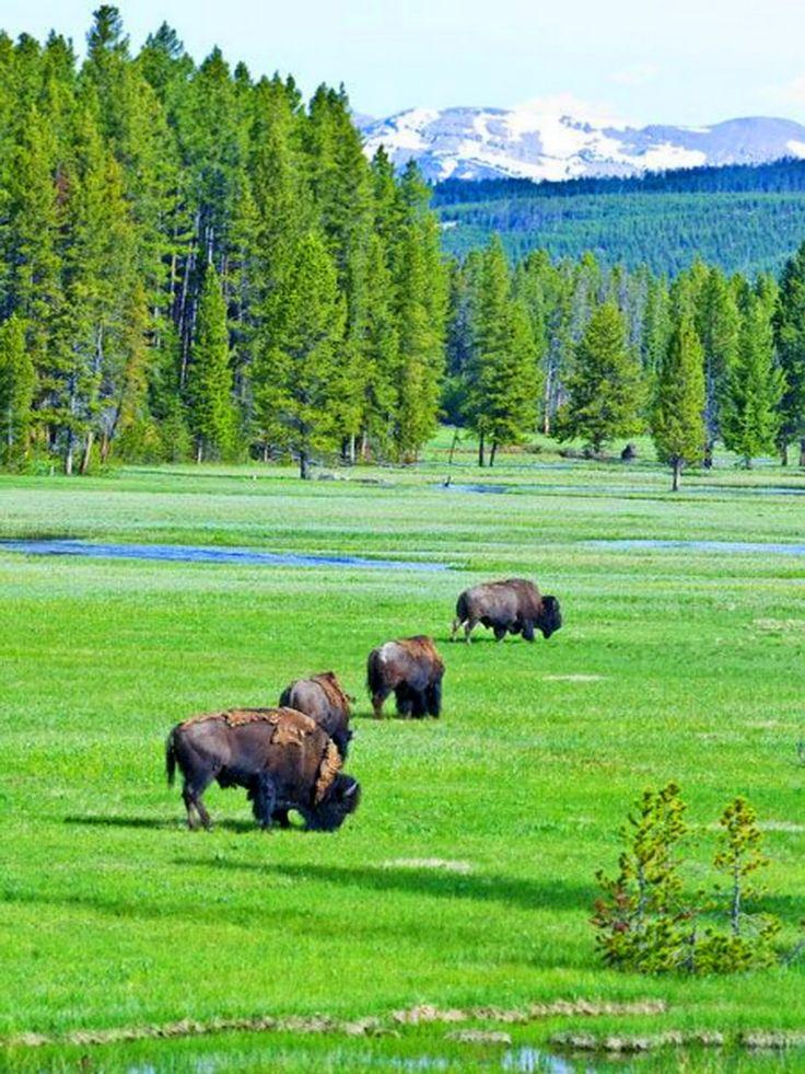 Yellowstone. SB