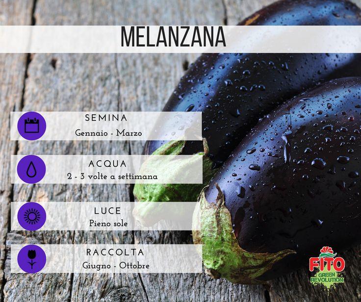 Diffusa oggi in tutto il bacino mediterraneo, la melanzana giunse in Europa intorno al XV grazie agli Arabi che la scoprirono a loro volta in India e Cina. L'Italia oggi è tra i più grandi produttori e consumatori di melanzane al mondo, con la Sicilia che da sola copre un terzo dell'intera produzione nazionale.  Molto ricca in acqua, in sali minerali e vitamina C, la melanzana è invece povera di proteine, grassi e carboidrati e per questo – oltre che per il suo basso contenuto calorico –…