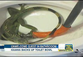 9-Jun-2015 22:32 - VERSTOPTE WC? DIT HAD ZELFS DE LOODGIETER NOG NOOIT MEEGEMAAKT. Een gezin uit de Amerikaanse staat Florida deed onlangs een glibberige ontdekking in de badkamer. De 51-jarige Marian Lindquist belde naar eigen…...