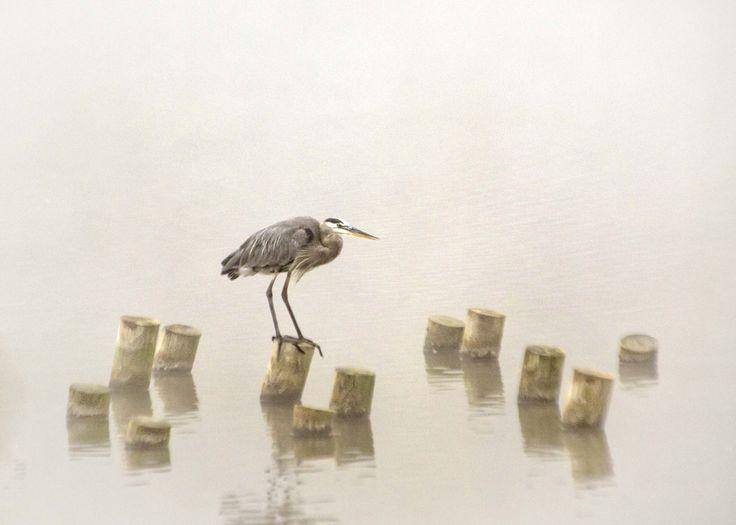 Mejores 66 imágenes de Animals en Pinterest | Animales, Aves y ...