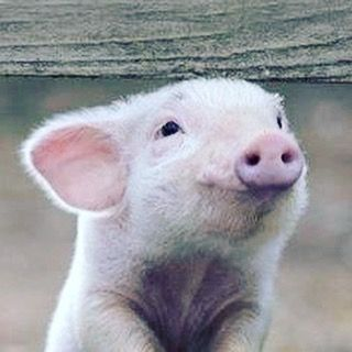 """This little piggy went to market This little piggy stayed at home This little piggy had roast beef This little piggy had none. And this little piggy went... """"Wee wee wee"""" all the way home..#westernfairartisansmarket #buylocal #shoplocal #jewelry #locket"""